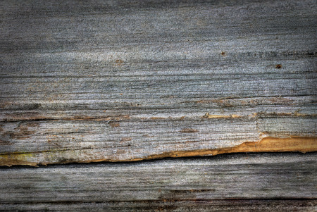barn wood: Old grey wood plank background, hdr rendering
