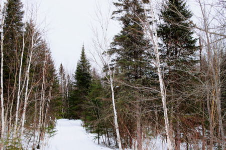 boreal: Northern boreal forest landscape in winter Stock Photo