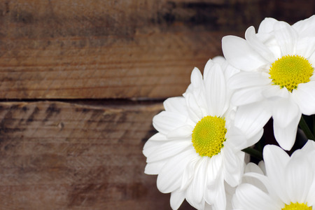 Daisy flowers over wood background, copy space