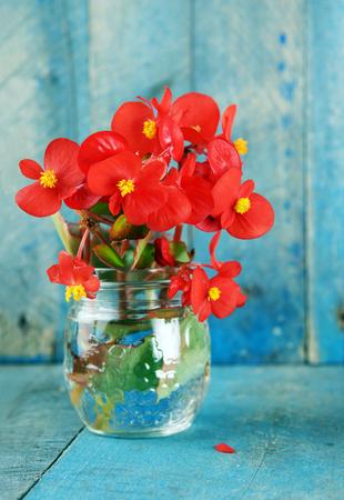 petites fleurs: Les fleurs rouges dans un pot en verre sur fond de bois bleu vertical