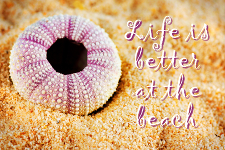 echinoderm: Sea urchin endoskeleton on sand, hdr with vignette and text Stock Photo