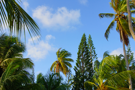 Tropical palm trees and sky