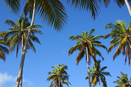 Tropical palm trees, blue sky and moon