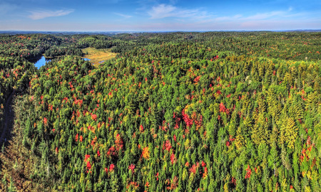 Panoramic aerial view of colorful fall forest