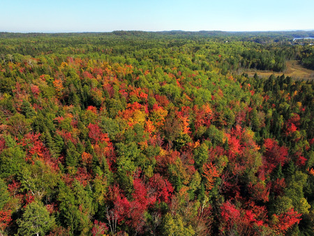 Aerial view of stunning colorful fall forest hills