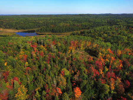 Aerial view of colorful fall forest