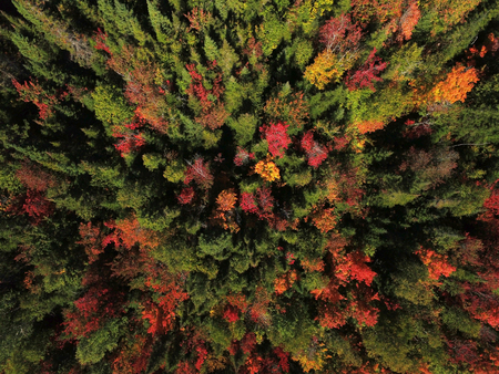 Aerial view of beautiful colorful forest during fall Stock fotó - 91091956