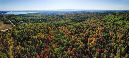 Beautiful panorama aerial view of colorful fall forest
