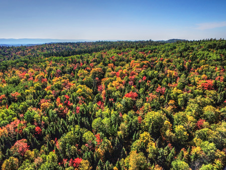 Aerial view of fall colors forest hills Stock Photo