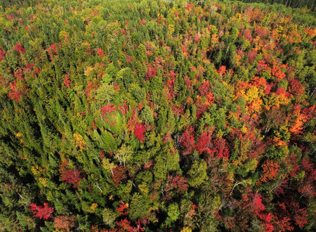 Beautiful aerial view of colorful fall forest Stock fotó