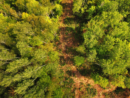 Aerial view of path across forest