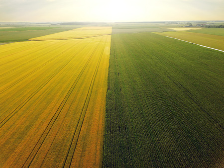 Aerial view of barley and corn field, perspective, golden hour