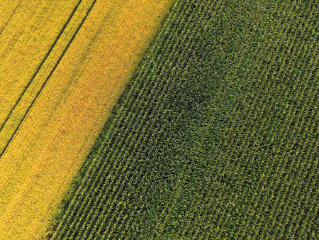 Aerial view of corn and barley field, beautiful yellow and green contrast Stock fotó - 105778733