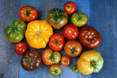 Delicous tomatoes different colors on old blue wood Stok Fotoğraf