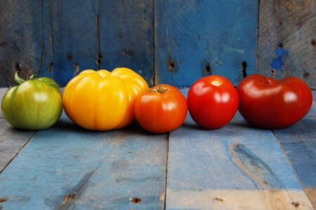 Color gradient of tomatoes in a row on blue barn wood