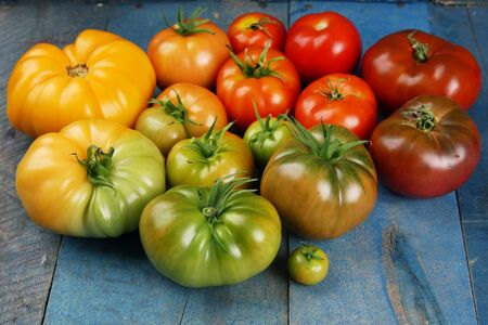 Different color tomatoes forming gradient on blue barn wood