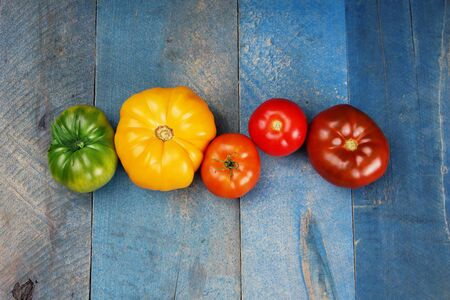 Beautiful row of colorful green, yellow, orange, red tomatoes