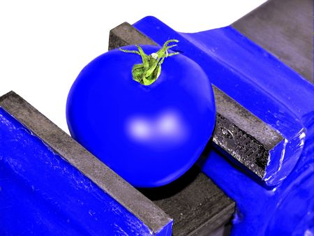 genetically engineered: Genetic Engineering - Blue Tomato in an Engineers Vice
