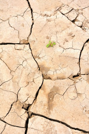 Baked and cracked earth with one smalll seedling appearing. Stock Photo - 7177820