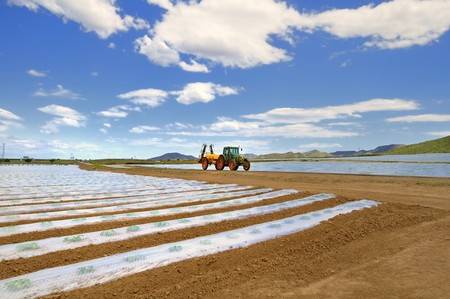 A tractor with spray equipment crossing fields of crops covered with polythene cloches.