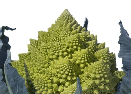 Broccoli Romanesco - Roman Cauliflower