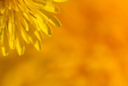 An extreme macro of the center of a dandelion. This image is intended to be a soft focus abstract so as to be a beautiful background without being too distracting and busy. Archivio Fotografico
