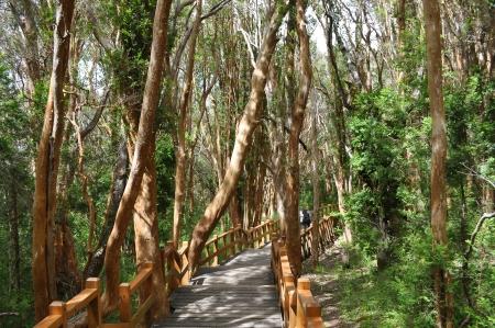 Los Arrayanes National Park in San Carlos de Bariloche Argentinië