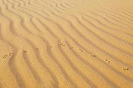 Bird traces in the sand. White sand dune. It is top destination in Mui Ne. Vietnam photo