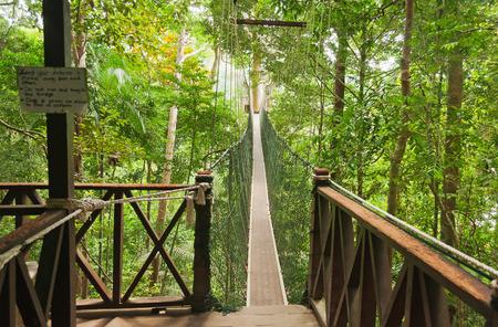 taman: Canopy walkway. Taman Negara National Park. Malaysia