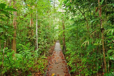 taman: Taman Negara National Park. Malaysia