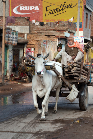 bullock: VRINDAVAN, INDIA - DEC 15, 2014:  Unidentified  man and boy on bullock cart at the road. Vrindavan is considered to be a holy place. The major tradition followed in the area is Vaisnavism. It is the place where Krishna spent his childhood days.