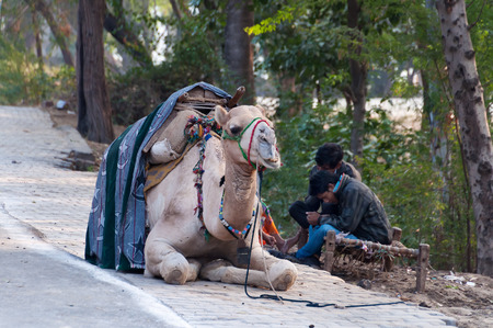fatehpur sikri: AGRA, INDIA - DEC 16, 2014: Cameleers with camel wait for  tourists on the street. Agra is major tourist destination because of its many splendid Mughal-era buildings, most notably the Taj Mahal, Agra Fort and Fatehpur Sikri