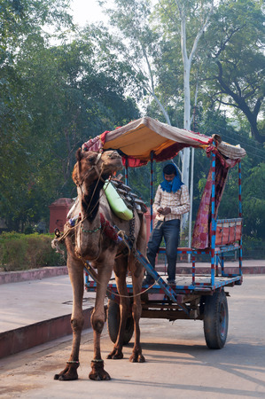 fatehpur sikri: AGRA, INDIA - DEC 17, 2014: Cameleers with camel wait for  tourists on the street. Agra is major tourist destination because of its many splendid Mughal-era buildings, most notably the Taj Mahal, Agra Fort and Fatehpur Sikri Editorial