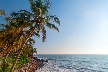 varkala: View of Varkala beach and palm trees. Kerala. India
