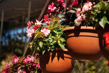 flowerpots: Flowerpots with Impatiens flowers in the garden