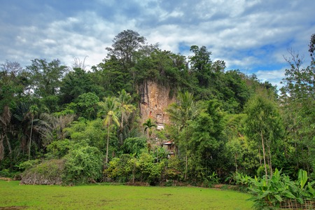 royal family: Suaya is cliffs old burial site of the royal family of Sangalla in Tana Toraja.