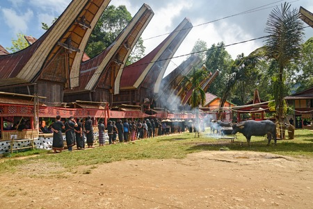 toraja: Tana Toraja, Indonesia - Dec 10, 2015:  Unidentified group of people in black at funeral ceremony. In Toraja the funeral ritual is the most elaborate and expensive even