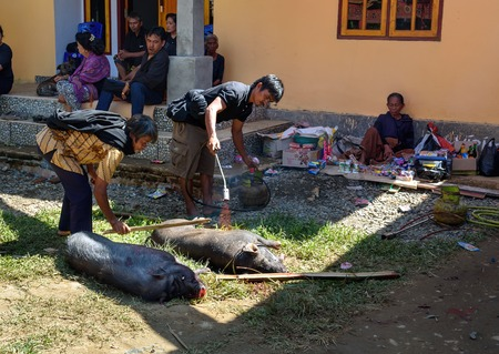 pig skin: Tana Toraja, Indonesia - Dec 10, 2015: Men burning skin slaughtered pig in the funeral ceremony. In Toraja the funeral ritual is the most elaborate and expensive even. Tana Toraja. South Sulawesi, Indonesia