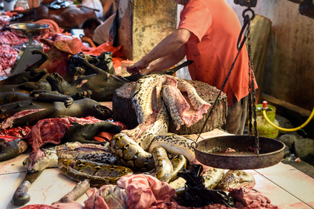 terribly: Meat of snake on Tomohon Traditional Market. North Sulawesi. Indonesia