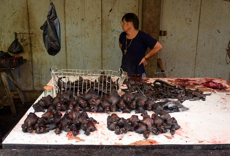 terribly: Tomohon, Indonesia - Dec 23, 2015: Roasted bats on Tomohon Traditional Market. North Sulawesi