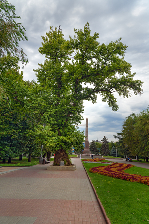 arbol alamo: Volgograd, Russia - August 31, 2016: Memorial poplar tree on Square of Fallen Fighters. It is the only tree left after Stalingrad Battle