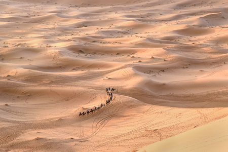 Caravan of Camels in Erg Chebbi Sand dunes near Merzouga, Morocco Stock Photo