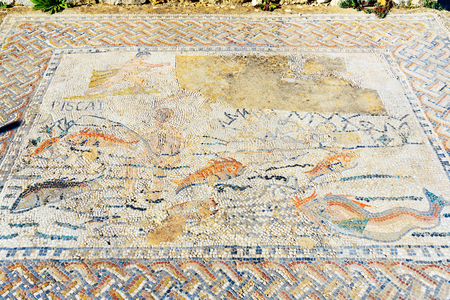 Floor mosaic in House in Roman ruins, ancient Roman city of Volubilis. Morocco. North Africa