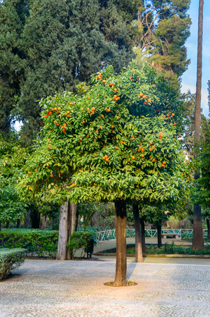 fes: Jardin Jnan Sbil, Royal Garden. Gardens Jinan was founded in the 18th century by Sultan Moulay Abdellah. Fes. Morroco Stock Photo