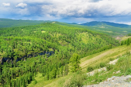 View on on forest and mountains. Ulagan. Altai Republic, Siberia. Russia