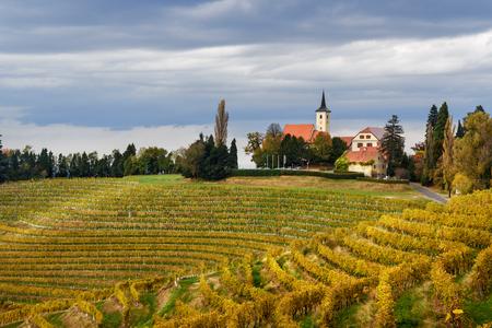 Bellissimo paesaggio di vigneti di Jeruzalem sulle colline slovene a Ljutomer. Slovenia nord-orientale