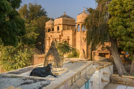 Black goat lies by the temple at Gadisar lake in Jaisalmer. Rajasthan. India Stock Photo