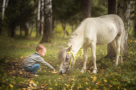 Little blond boy feeding little horse pony carrot in summer forest