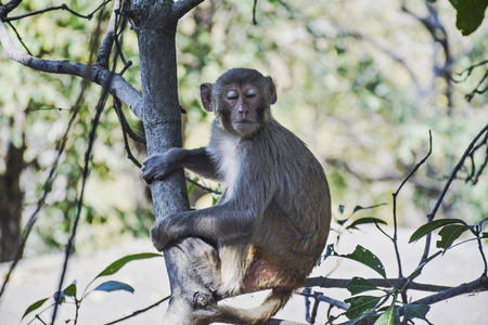 primates: monkey on the tree sitting in branch Stock Photo
