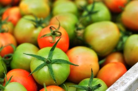 ripen: A pile of fresh tomatoes for sale Stock Photo